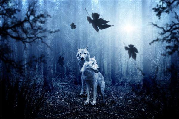梦见狼扑向自己