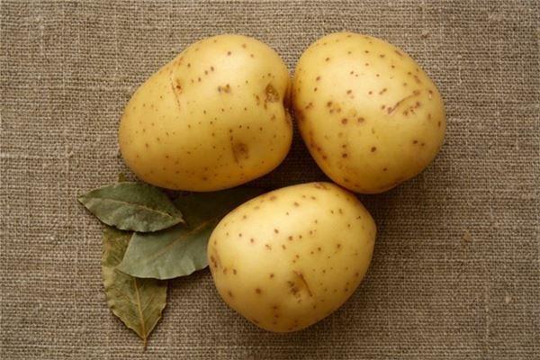 梦见土豆开花