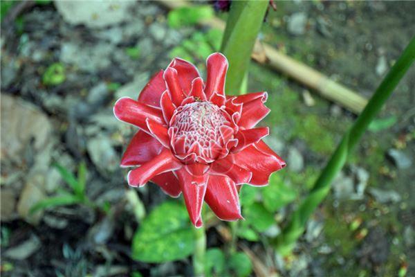 梦见满树红花