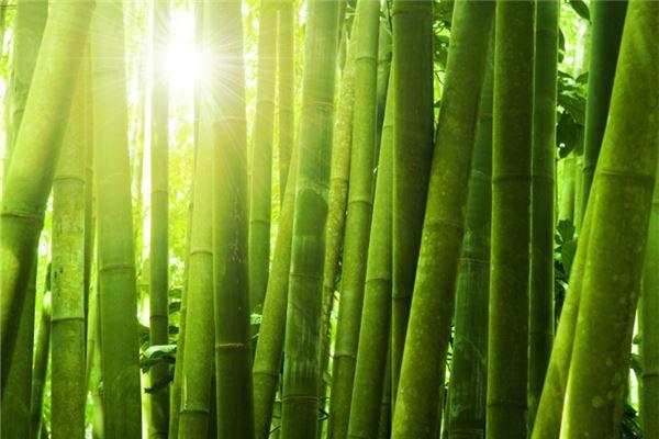 梦见砍竹子