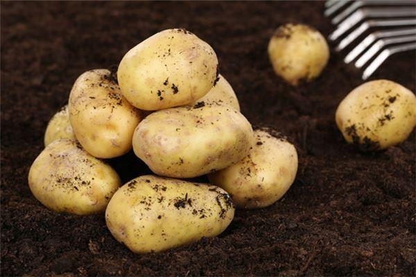 梦见种土豆