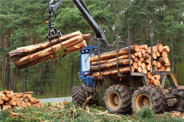 梦见树被砍