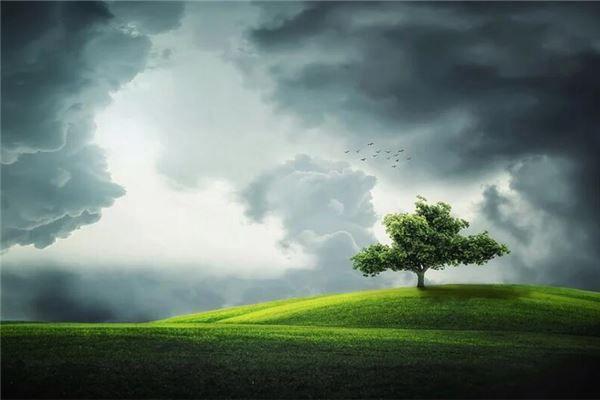 梦见大树绿叶