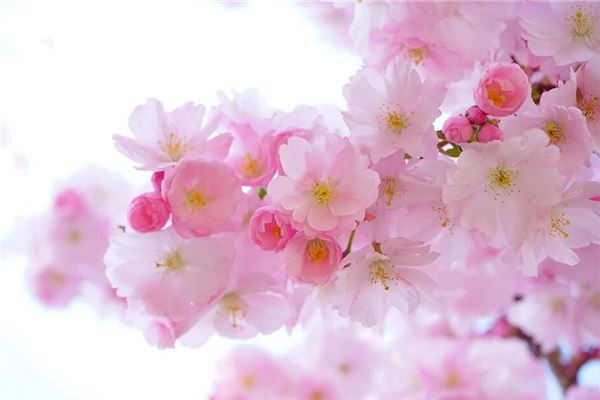 梦见春天来了