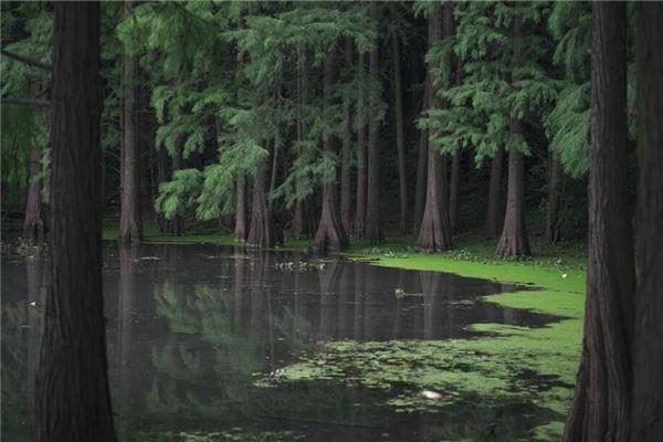 梦见湖水发臭