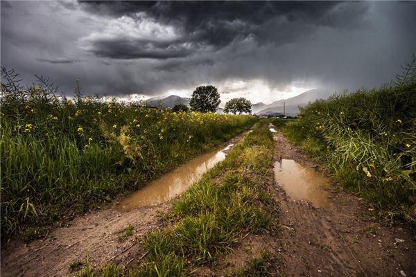 梦见黄泥水