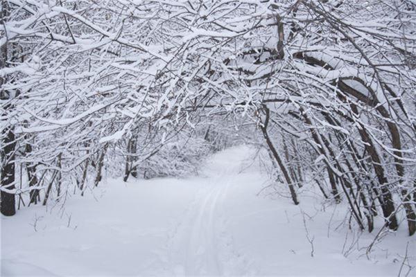 梦见过年下雪