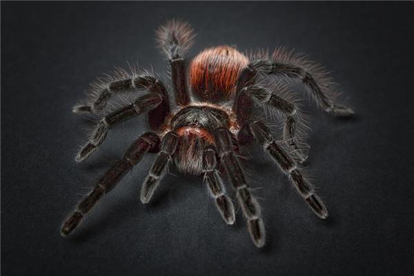 梦见被黑蜘蛛咬伤