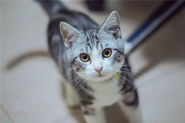 梦见猫咬我