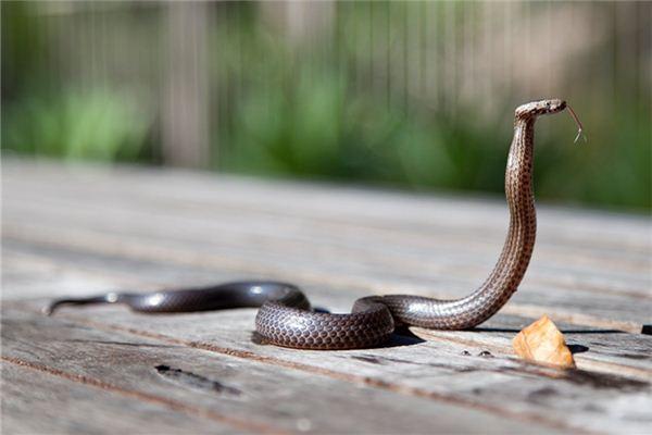 梦见蛇缠身