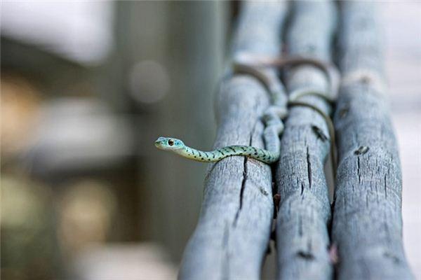 梦见打蛇是什么预兆