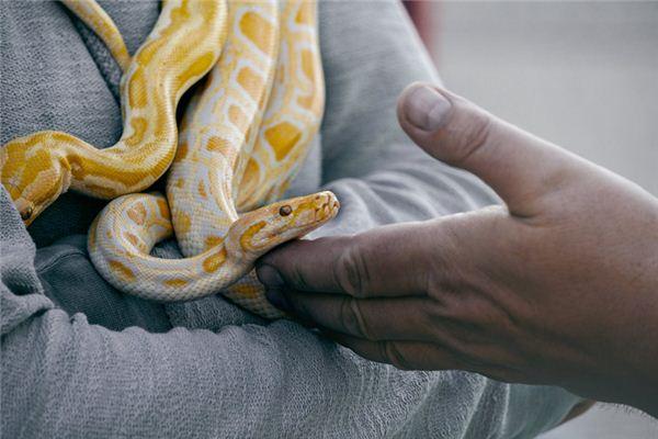 梦见蟒蛇是什么意思