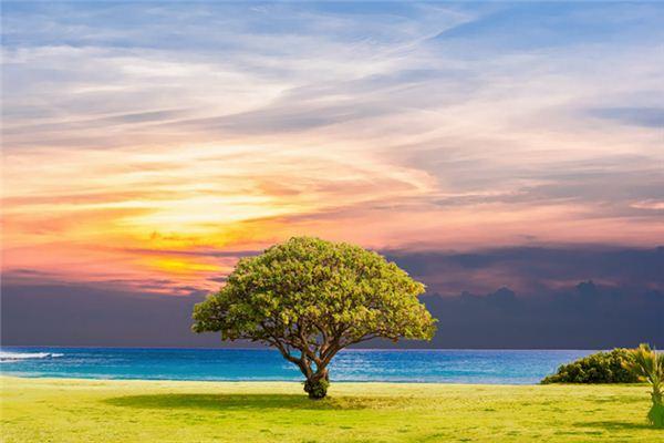 梦见树是什么意思