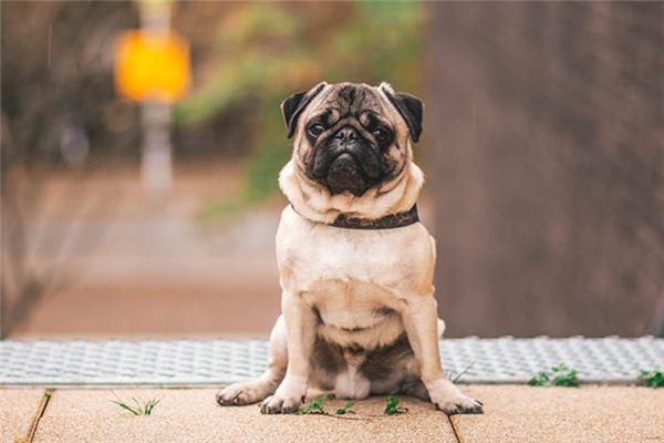 大奖娱乐平台狗是什么意思
