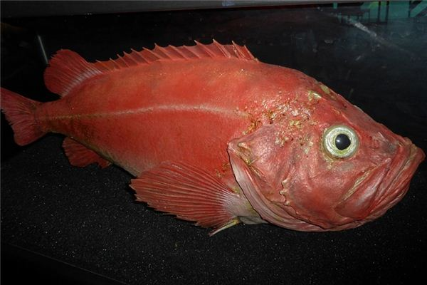 梦见红鱼是什么意思