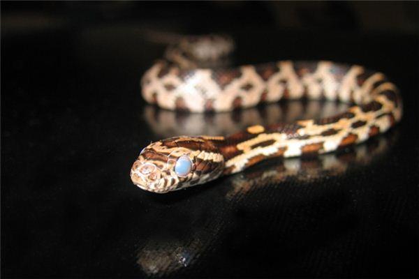 梦见很多蛇是什么意思