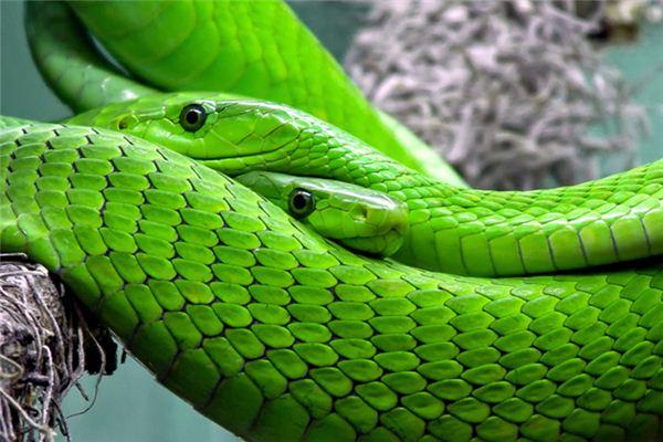 梦见蛇是什么意思
