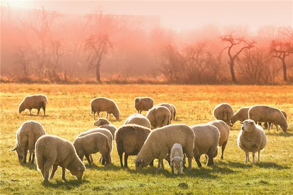 梦见杀羊是什么意思