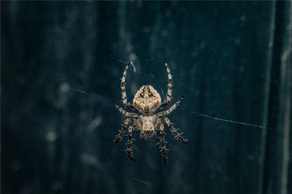 做夢夢到蜘蛛
