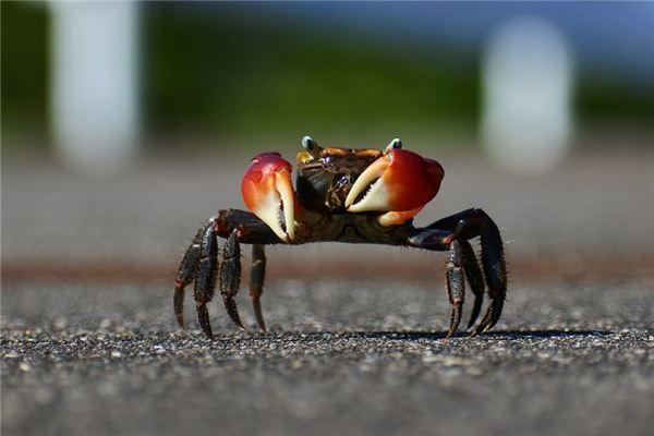 孕妇梦见螃蟹