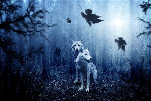 梦见打狼是什么意思