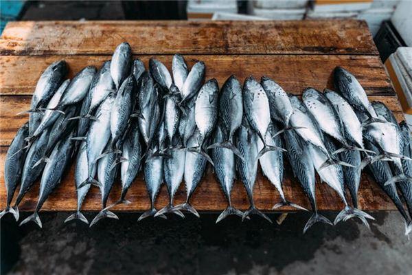 梦见死鱼是什么意思