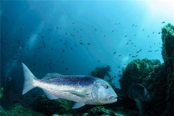 梦见大鱼是什么意思