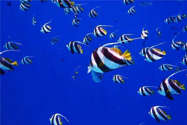 梦见好多鱼