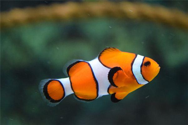 孕妇梦见鱼