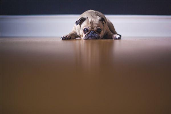 梦见狗吃屎是什么意思