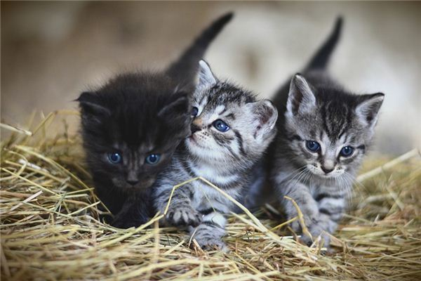 梦见好多猫是什么意思