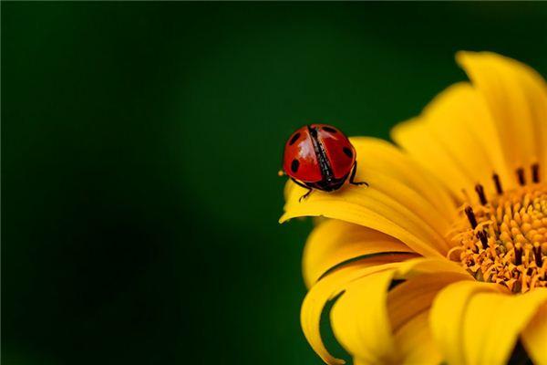夢見甲蟲是什么意思