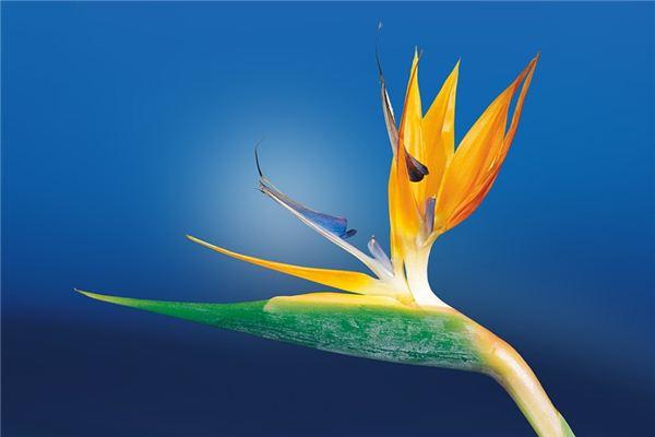 夢見蘭花是什么意思