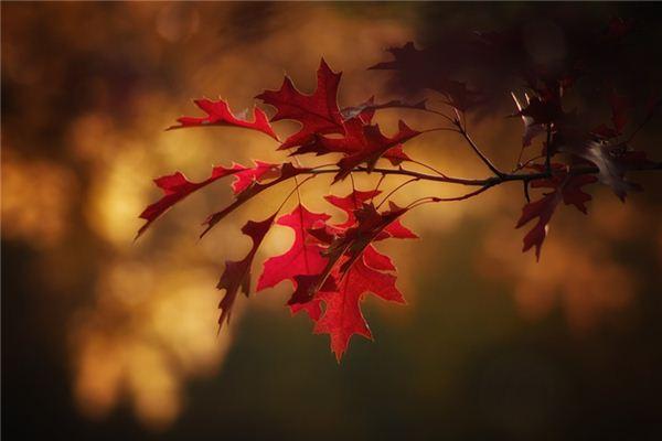 梦见树叶是什么意思