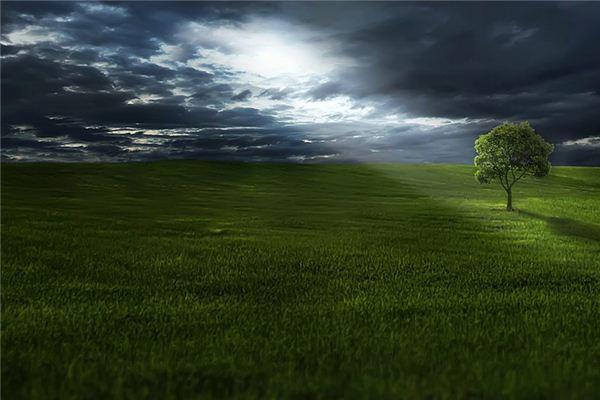 梦见草是什么意思