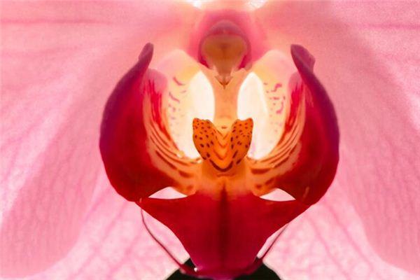 梦见生殖器是什么意思