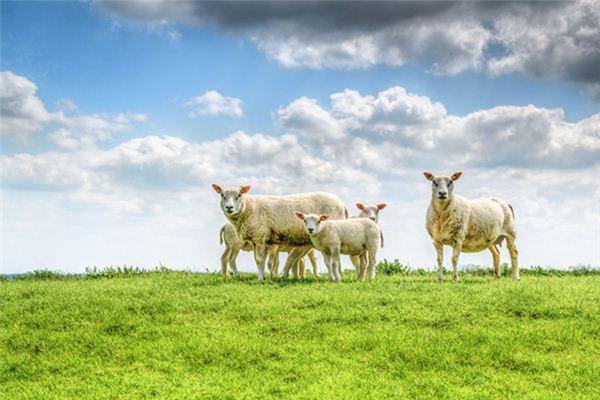梦见羊是什么意思