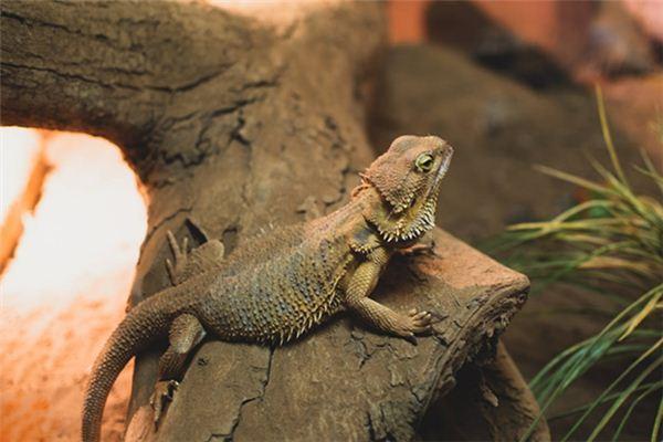 梦见爬虫类是什么意思