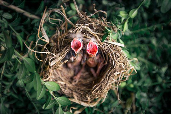 梦见鸟巢是什么意思