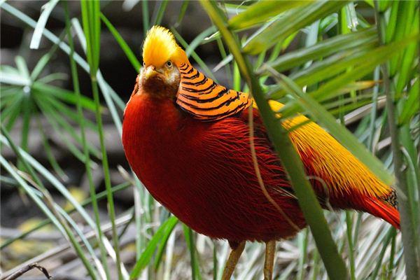 梦见金翅鸟是什么意思