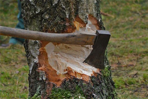梦见砍树是什么意思