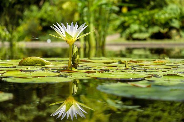夢見池塘是什么意思