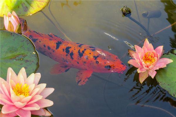梦见金鱼是什么意思