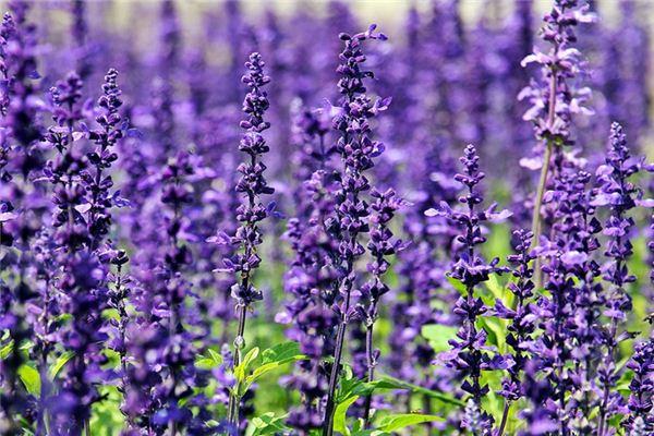 梦见紫色是什么意思