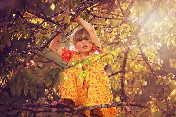 梦见爬树是什么意思