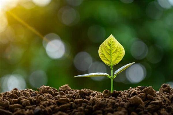梦见植树是什么意思