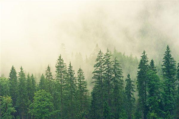 梦见森林是什么意思
