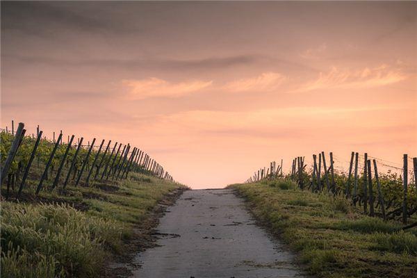 梦见道路是什么意思