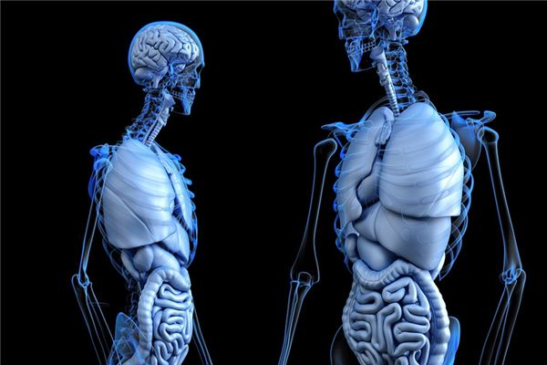 梦见肝脏是什么意思