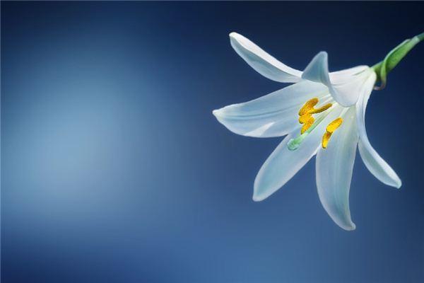 梦见百合花是什么意思